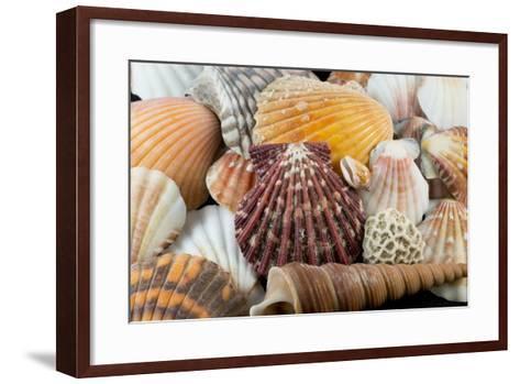 Detail of Seashells from around the World-Cindy Miller Hopkins-Framed Art Print