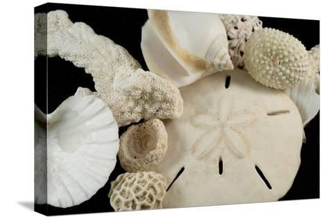 White Seashells, Sand Dollar, and Coral from around the World-Cindy Miller Hopkins-Stretched Canvas Print