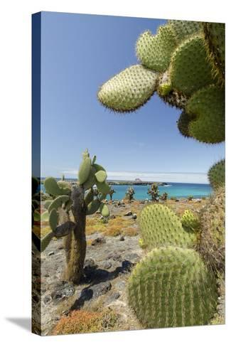 Giant Prickly Pear Cactus, South Plaza Island, Galapagos, Ecuador-Cindy Miller Hopkins-Stretched Canvas Print