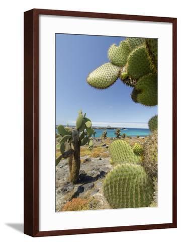 Giant Prickly Pear Cactus, South Plaza Island, Galapagos, Ecuador-Cindy Miller Hopkins-Framed Art Print