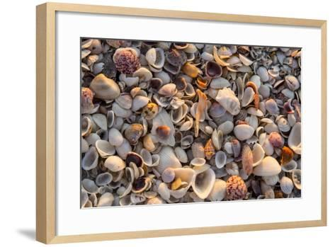 Seashells on Sanibel Island, Florida, USA-Chuck Haney-Framed Art Print