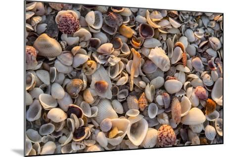 Seashells on Sanibel Island, Florida, USA-Chuck Haney-Mounted Photographic Print