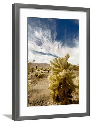 Cholla Blooms, Joshua Tree National Park, California, USA-Richard Duval-Framed Art Print