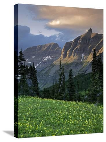Hanging Gardens, Logan Pass, Glacier National Park, Montana, USA-Charles Gurche-Stretched Canvas Print