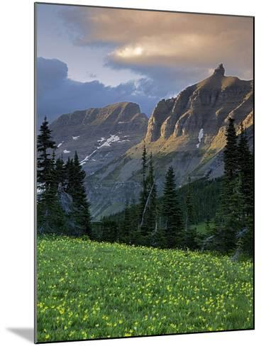 Hanging Gardens, Logan Pass, Glacier National Park, Montana, USA-Charles Gurche-Mounted Photographic Print
