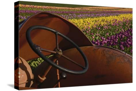Tractor at the Tulip Festival, Woodburn, Oregon, USA-Michel Hersen-Stretched Canvas Print