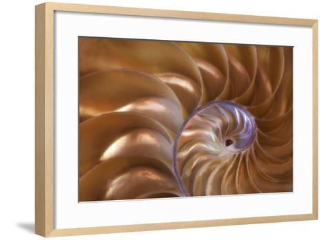 Abstract of a Nautilus Shell, Georgia, USA-Joanne Wells-Framed Art Print