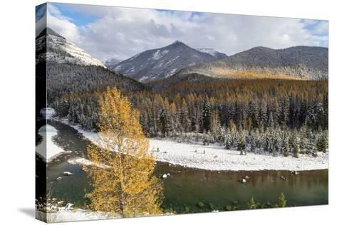Flathead River in Fall Colors, Glacier National Park, Montana, USA-Chuck Haney-Stretched Canvas Print