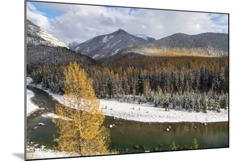 Flathead River in Fall Colors, Glacier National Park, Montana, USA-Chuck Haney-Mounted Photographic Print