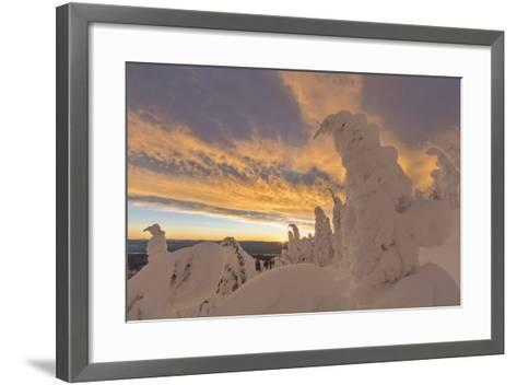 Snow Ghosts in the Whitefish Range, Montana, USA-Chuck Haney-Framed Art Print