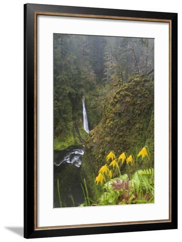 Loowit Falls in Forest Scenery, Columbia Gorge, Oregon, USA-Gary Luhm-Framed Art Print