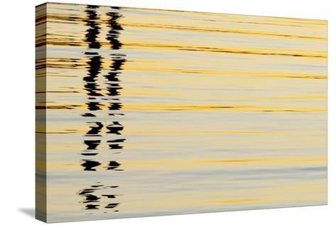 Abstract Reflections in San Diego Harbort, San Diego, California, USA-Jaynes Gallery-Stretched Canvas Print