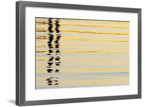 Abstract Reflections in San Diego Harbort, San Diego, California, USA-Jaynes Gallery-Framed Art Print