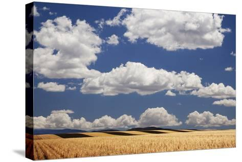 Landscape of Wheat Fields in Western Part of State, Colorado, USA-Jaynes Gallery-Stretched Canvas Print
