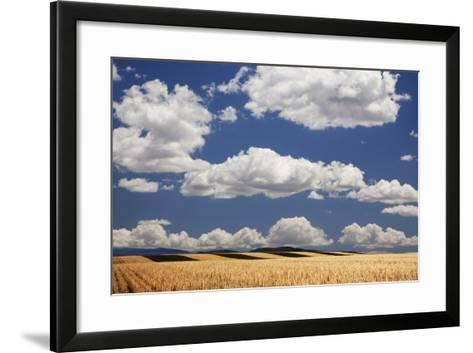 Landscape of Wheat Fields in Western Part of State, Colorado, USA-Jaynes Gallery-Framed Art Print