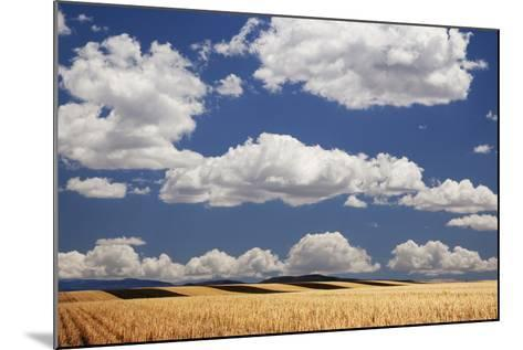 Landscape of Wheat Fields in Western Part of State, Colorado, USA-Jaynes Gallery-Mounted Photographic Print