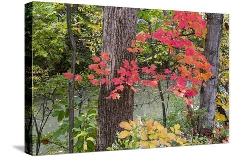 Autumn Colors at Independence State Park in Defiance, Ohio, USA-Chuck Haney-Stretched Canvas Print