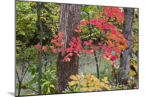 Autumn Colors at Independence State Park in Defiance, Ohio, USA-Chuck Haney-Mounted Photographic Print