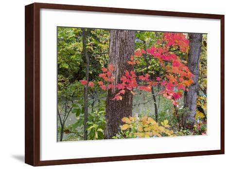 Autumn Colors at Independence State Park in Defiance, Ohio, USA-Chuck Haney-Framed Art Print