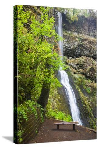Winter Falls, Silver Falls State Park, Oregon, USA-Jamie & Judy Wild-Stretched Canvas Print