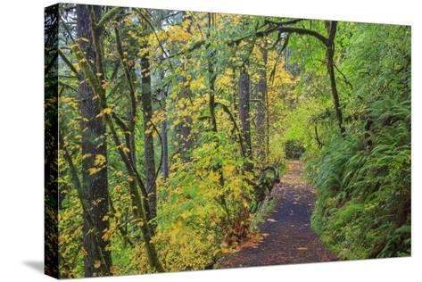 Forest Trail, Silver Falls State Park, Oregon, USA-Jamie & Judy Wild-Stretched Canvas Print
