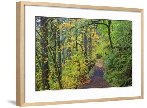 Forest Trail, Silver Falls State Park, Oregon, USA-Jamie & Judy Wild-Framed Art Print