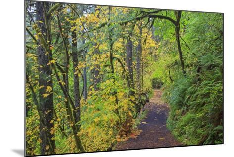 Forest Trail, Silver Falls State Park, Oregon, USA-Jamie & Judy Wild-Mounted Photographic Print