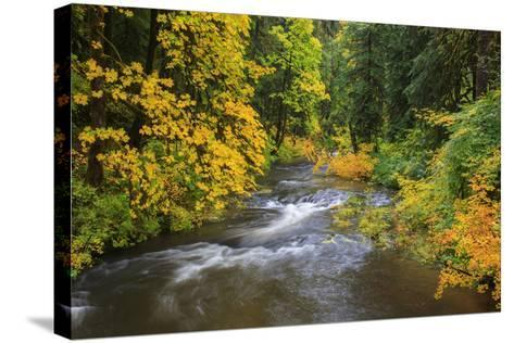 North Fork Silver Creek, Silver Falls State Park, Oregon, USA-Jamie & Judy Wild-Stretched Canvas Print