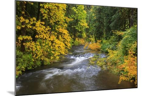 North Fork Silver Creek, Silver Falls State Park, Oregon, USA-Jamie & Judy Wild-Mounted Photographic Print