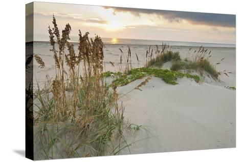 Sea Oats on Gulf of Mexico at South Padre Island, Texas, USA-Larry Ditto-Stretched Canvas Print