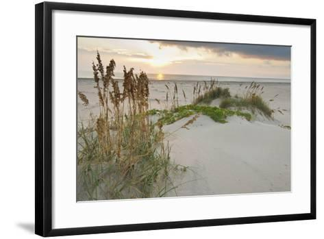 Sea Oats on Gulf of Mexico at South Padre Island, Texas, USA-Larry Ditto-Framed Art Print