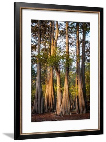 Bald Cypress in Water, Pierce Lake, Atchafalaya Basin, Louisiana, USA-Alison Jones-Framed Art Print