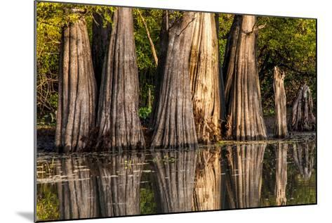 Bald Cypress in Water, Pierce Lake, Atchafalaya Basin, Louisiana, USA-Alison Jones-Mounted Photographic Print