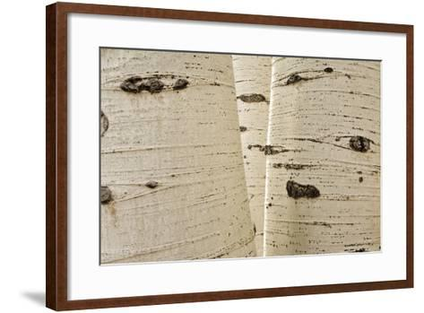 Aspens in Gunnison National Forest Colorado, USA-Charles Gurche-Framed Art Print