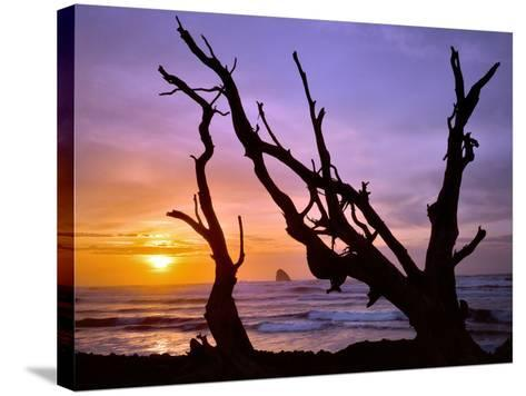 Sunset Framed by Driftwood, Cape Meares, Oregon, USA-Jaynes Gallery-Stretched Canvas Print