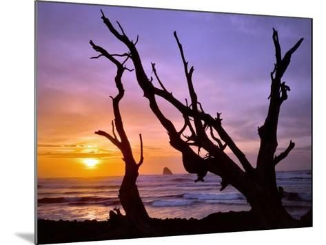 Sunset Framed by Driftwood, Cape Meares, Oregon, USA-Jaynes Gallery-Mounted Photographic Print