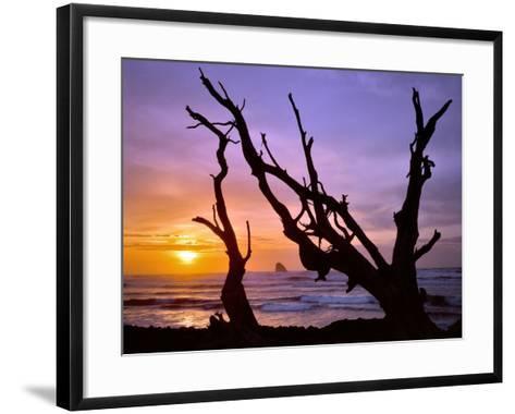 Sunset Framed by Driftwood, Cape Meares, Oregon, USA-Jaynes Gallery-Framed Art Print