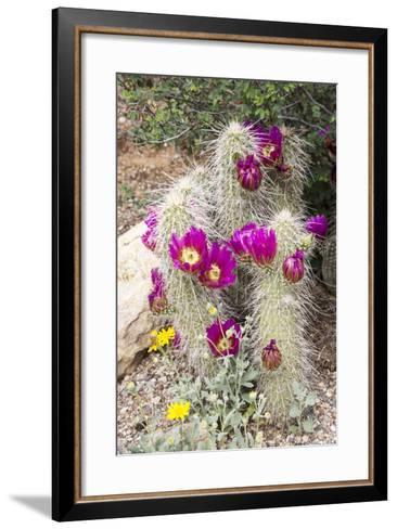 Cactus and Succulent Garden, Apache Hedgehog, Tucson, Arizona, USA-Jamie & Judy Wild-Framed Art Print