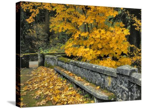 Stone Wall Framed by Big Leaf Maple, Columbia River Gorge, Oregon, USA-Jaynes Gallery-Stretched Canvas Print