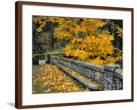 Stone Wall Framed by Big Leaf Maple, Columbia River Gorge, Oregon, USA-Jaynes Gallery-Framed Art Print