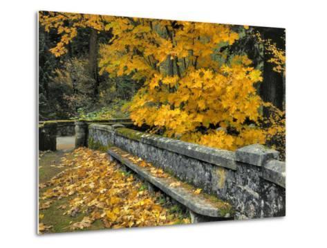 Stone Wall Framed by Big Leaf Maple, Columbia River Gorge, Oregon, USA-Jaynes Gallery-Metal Print