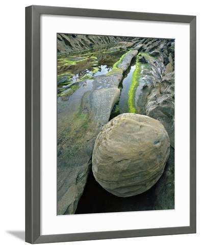 Smooth Sandstone Boulder, Shore Acres State Park, Oregon, USA-Jaynes Gallery-Framed Art Print