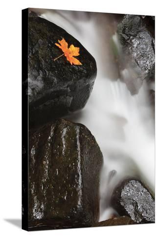 Tanner Creek, Columbia River Gorge, Oregon, USA-Jamie & Judy Wild-Stretched Canvas Print