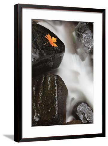 Tanner Creek, Columbia River Gorge, Oregon, USA-Jamie & Judy Wild-Framed Art Print