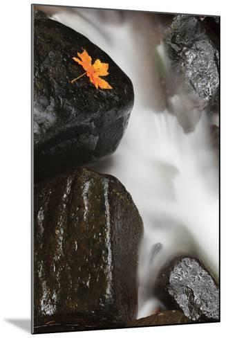 Tanner Creek, Columbia River Gorge, Oregon, USA-Jamie & Judy Wild-Mounted Photographic Print
