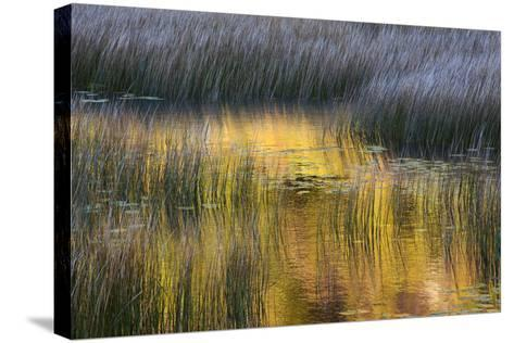 Fall Reflections in a Marsh, Acadia National Park, Maine, USA-Joanne Wells-Stretched Canvas Print