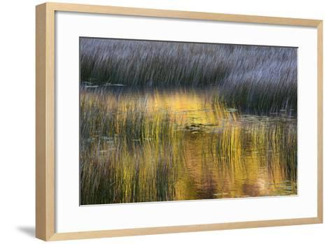 Fall Reflections in a Marsh, Acadia National Park, Maine, USA-Joanne Wells-Framed Art Print