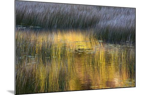 Fall Reflections in a Marsh, Acadia National Park, Maine, USA-Joanne Wells-Mounted Photographic Print