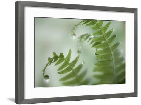 Close-Up of Dewy Deer Ferns, Seabeck, Washington, USA-Jaynes Gallery-Framed Art Print