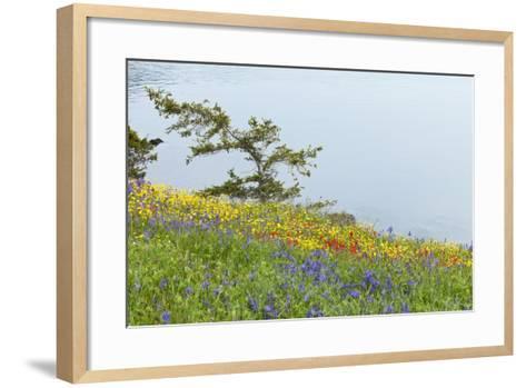 Wildflowers Overlooking Ocean, Yellow Island, Washington, USA-Jaynes Gallery-Framed Art Print